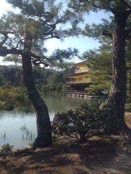Tempio Kinkakuji (Tempio del Padiglione d'Oro) - Kyoto