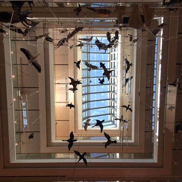 14 giugno 2018 - con RPBW Architects - MUSE – Museo delle Scienze, Trento (5/5)
